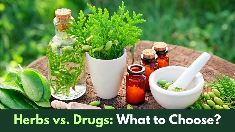 Herbs vs. Drugs What to Choose